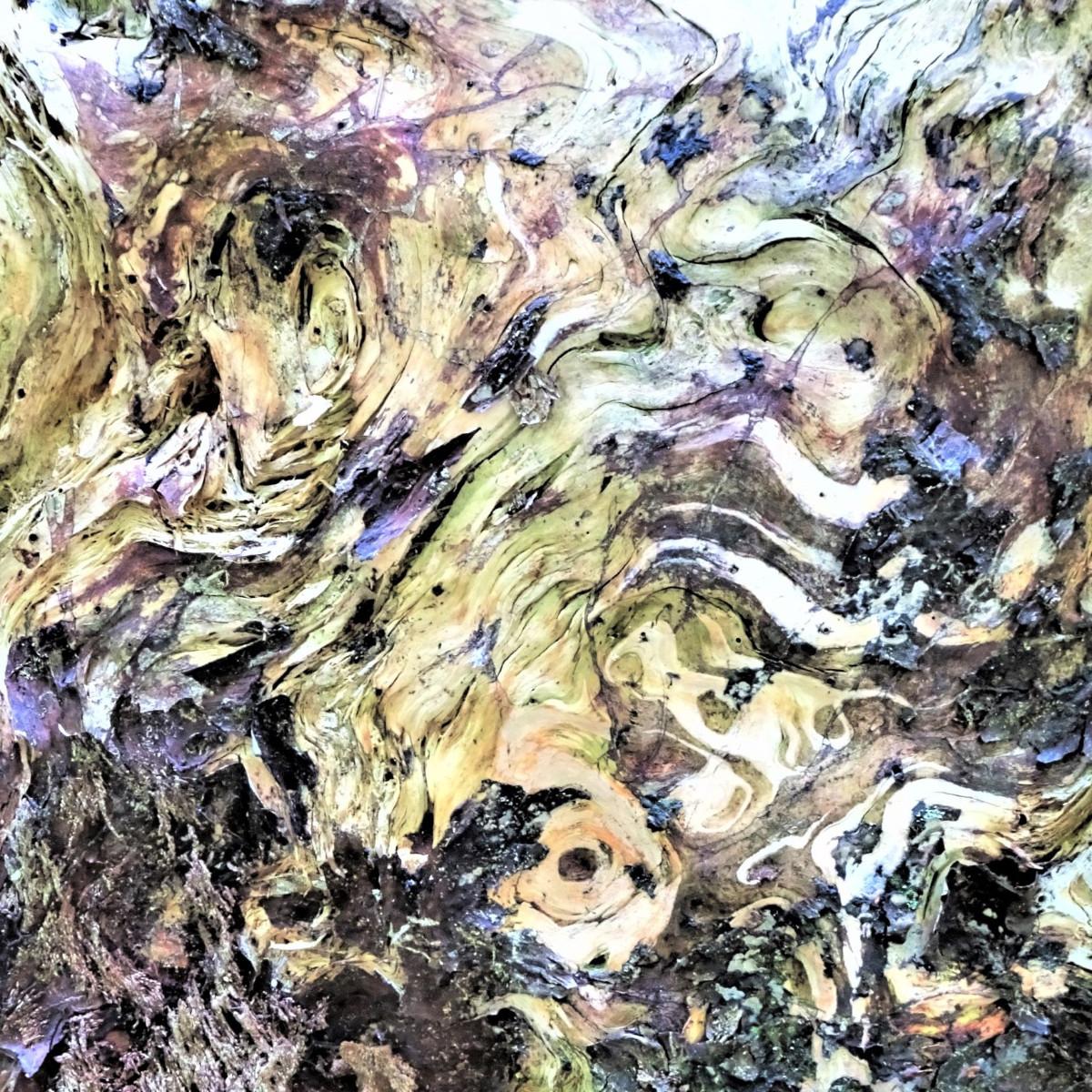 Regard en forêt sur le site d'ARTactif