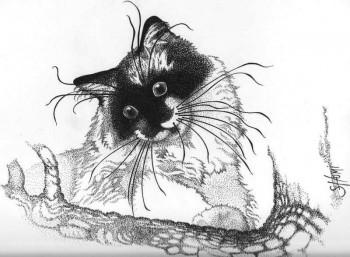 chat sur le site d'ARTactif