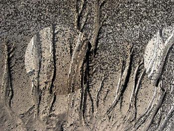 Traces sur plage sur le site d'ARTactif