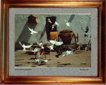 1983 Envol de pigeons sur le site d'ARTactif