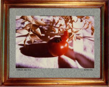 1984 Tomate érectus sur le site d'ARTactif