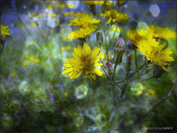 Magie Image 14 sur le site d'ARTactif