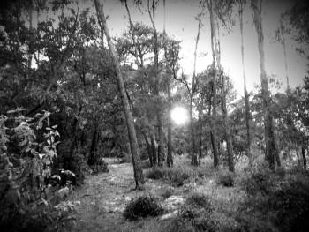 La forêt 1 sur le site d'ARTactif