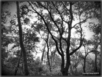La forêt 2 sur le site d'ARTactif