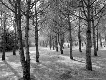 La foret de pins 2 sur le site d'ARTactif
