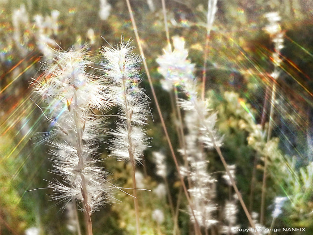 Nature 1 sur le site d'ARTactif