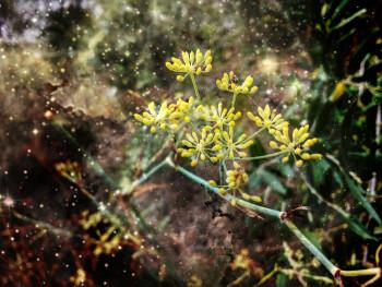 Nature 4 sur le site d'ARTactif