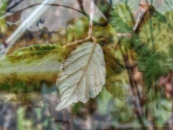 Nature 6 sur le site d'ARTactif