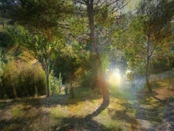 Nature 9 sur le site d'ARTactif