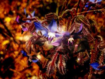 Floral 01 sur le site d'ARTactif