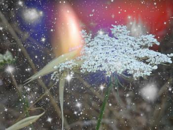 Floral 04 sur le site d'ARTactif
