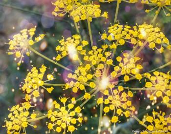 Floral 05 sur le site d'ARTactif