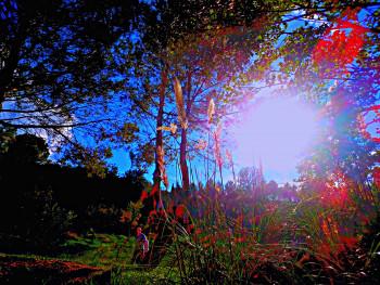 Forêt numérique sur le site d'ARTactif
