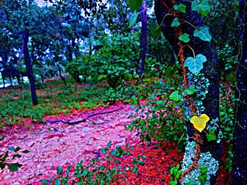 Forêt numérique 2 sur le site d'ARTactif