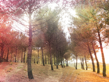 L'automne sur le site d'ARTactif