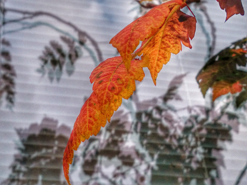 L'automne en filigrane sur le site d'ARTactif