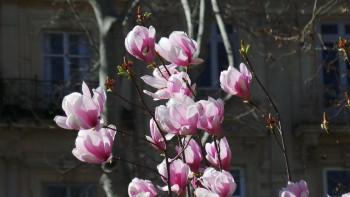 La cité des magnolias sur le site d'ARTactif