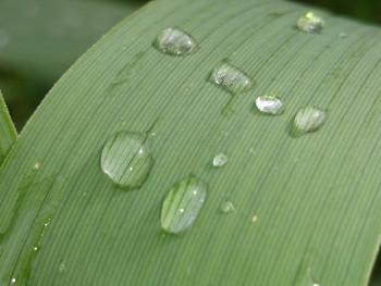 Feuille bambou sur le site d'ARTactif