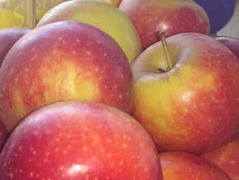Pommes sur le site d'ARTactif