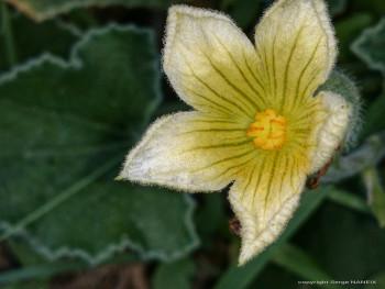 Fleur jaune sur le site d'ARTactif