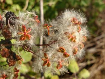 Féérie florale sur le site d'ARTactif