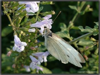 Papillon sur le site d'ARTactif