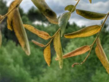 Petites feuilles sur le site d'ARTactif