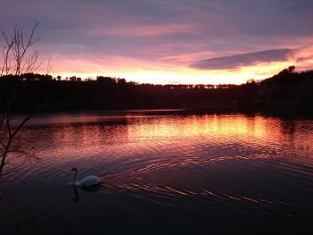Le cygne du lac sur le site d'ARTactif