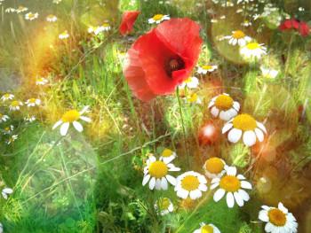 Eté fleuri sur le site d'ARTactif