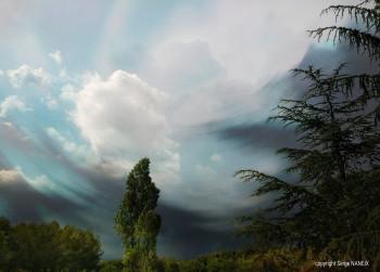 Forest sky sur le site d'ARTactif