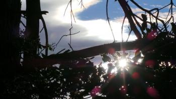 Soleil branches sur le site d'ARTactif