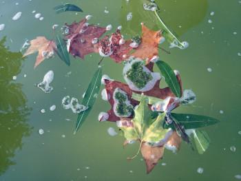 Feuilles à l'eau sur le site d'ARTactif