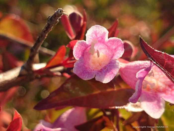 Fleur lumiére sur le site d'ARTactif