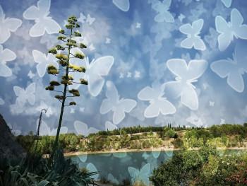 Papillon vole sur le site d'ARTactif