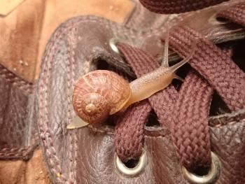 Escargots lacets sur le site d'ARTactif