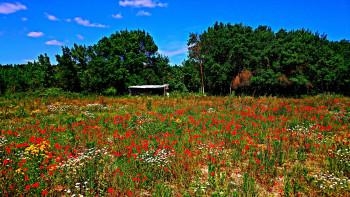 Fleurs des champs sur le site d'ARTactif