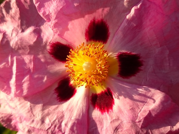Coeur de fleur sur le site d'ARTactif