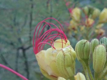 Fleur étrange sur le site d'ARTactif