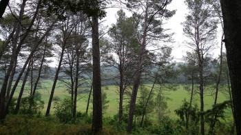 L'orée du bois sur le site d'ARTactif