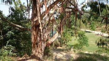 Eucalyptus sur le site d'ARTactif