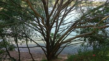 Sa majesté l'arbre sur le site d'ARTactif