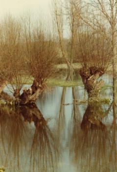 Réflexions sur Seine sur le site d'ARTactif