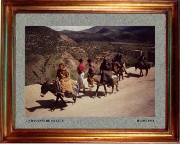 Maroc, caravane de mulets 1999 sur le site d'ARTactif